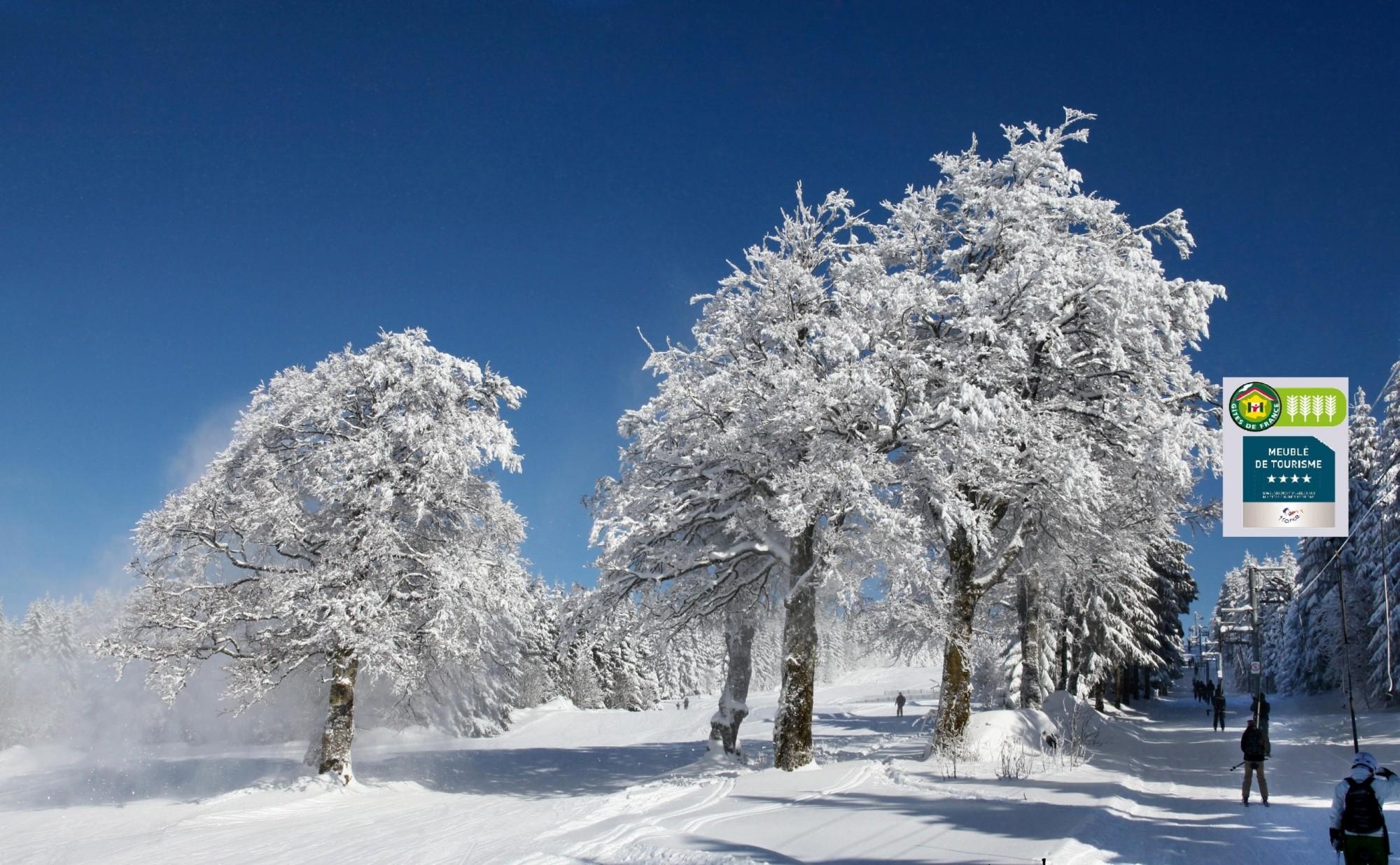 Piste hiver luge